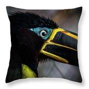 Aracari Throw Pillow