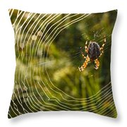 Araneus Morning Throw Pillow