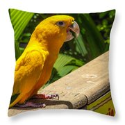 Ararajuba Throw Pillow by Fabio Giannini