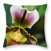 Arboretum Tropical House Orchid II Throw Pillow