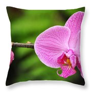 Arboretum Tropical House Orchid Throw Pillow