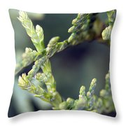 Arborvitae Throw Pillow