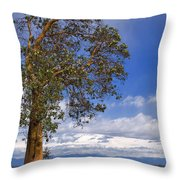 Arbutus Tree At Rathtrevor Beach British Columbia Throw Pillow