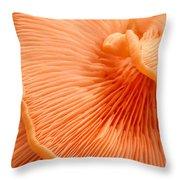 Arc Of Life Throw Pillow