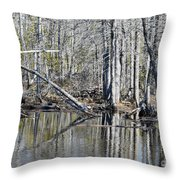 Arch And Reflections Throw Pillow