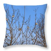 Arctic Buntings Throw Pillow