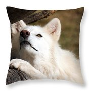 Arctic Curiosity Throw Pillow