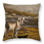 Arctic Fox In Tundra Throw Pillow