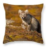 Arctic Fox Striding Out Throw Pillow