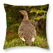 Arctic Willow Ptarmigan Throw Pillow