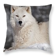 Arctic Wolf... Throw Pillow