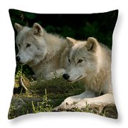 Arctic Wolf Pictures 1268 Throw Pillow