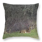 Are You Friend Or Foe Throw Pillow