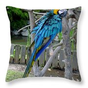 Arent I A Handsome Fellow - Blue And Gold Macaw Throw Pillow