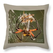 Argiope Spider Wrapping A Hornet Throw Pillow