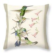 Arizona Hummingbirds Throw Pillow