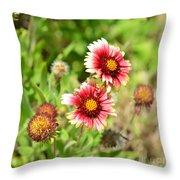 Arizona Sun Blanket Flowers Throw Pillow