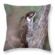 Arizona Woodpecker Throw Pillow