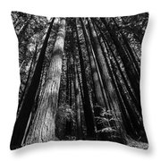 Armstrong National Park Redwoods Filtered Sun Black And White Throw Pillow