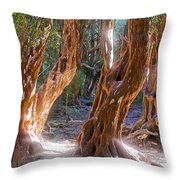Arrayanes Grove On Trail In Arrayanes National Park Near Bariloche-argentina Throw Pillow