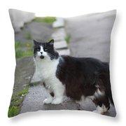 Arrogant Cat Throw Pillow