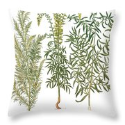 Artemisiae & Reseda Throw Pillow