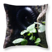 Arthropoda Throw Pillow