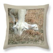 L Is For Lamb Throw Pillow