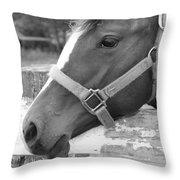 Horse Face Throw Pillow