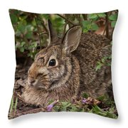 A Very Fine Bunny Resting Under The Lilac Bush Throw Pillow
