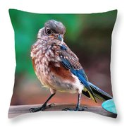 I'm New Around Here Throw Pillow