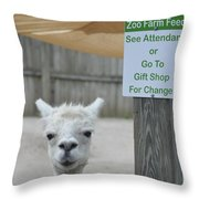 Begging Without A Word Throw Pillow
