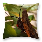 Asending Beetle Throw Pillow