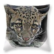 Asian Cloud Leopard Throw Pillow