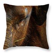 Asian Elephant Closeup Portrait Throw Pillow