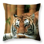 Asian Tiger 5 Throw Pillow