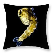 Asian Tiger Mosquito Pupa Throw Pillow
