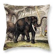 Asiatic Elephant With Young, 19th Throw Pillow
