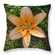 Asiatic Lily With Poster Edges Throw Pillow