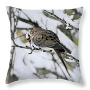 Asleep In The Snow - Mourning Dove Portrait Throw Pillow