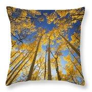 Aspen Tree Canopy 3 Throw Pillow