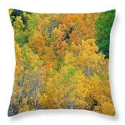 Aspens In Fall Eastern Sierras California Throw Pillow