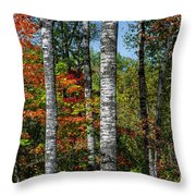 Aspens In Fall Forest Throw Pillow