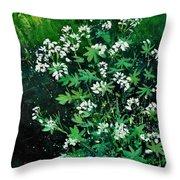 Asperules Throw Pillow
