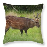 Assateague Sitka Deer Throw Pillow