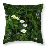 Aster And Daisies Throw Pillow