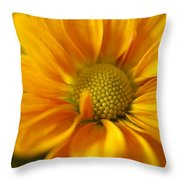 Aster Close Up Throw Pillow