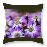 Aster Delights Throw Pillow