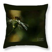 Aster's Peripheral Ray Throw Pillow