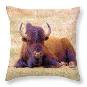 A Buffalo Staring Throw Pillow